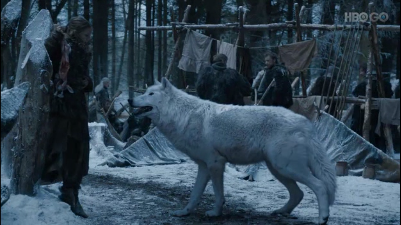 games of thrones direwolf
